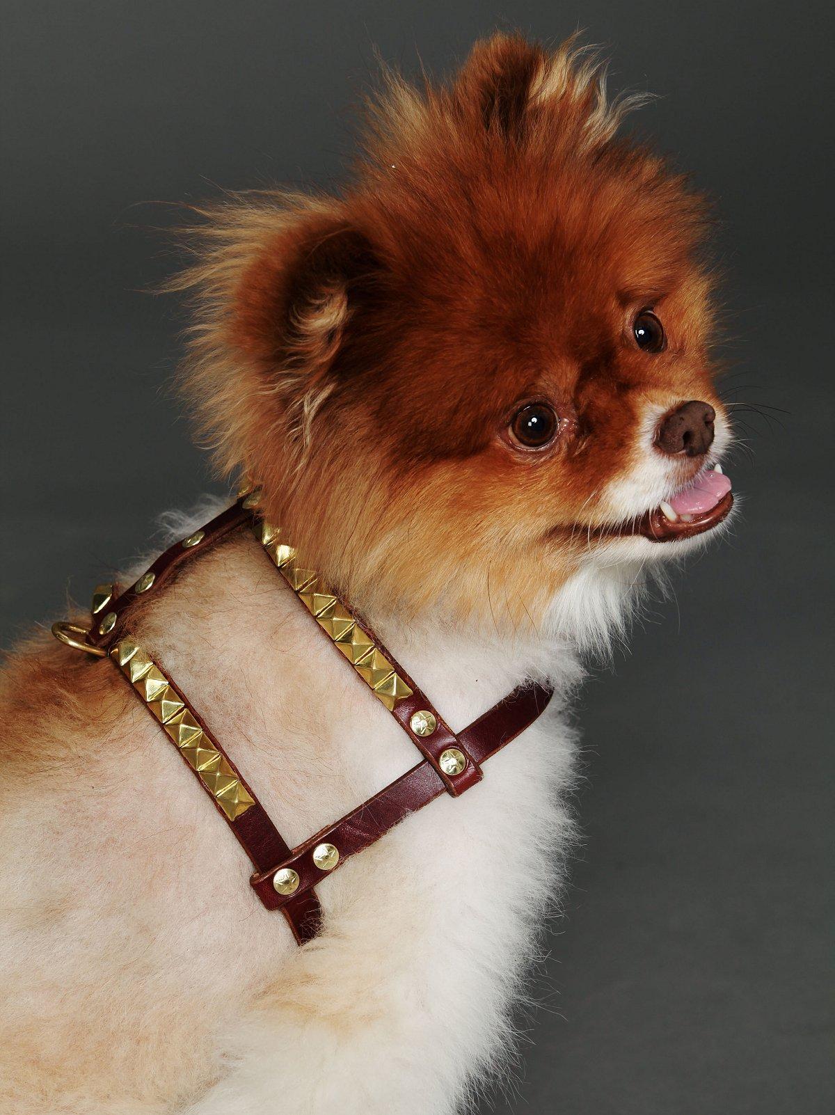 Nix Studded Harness