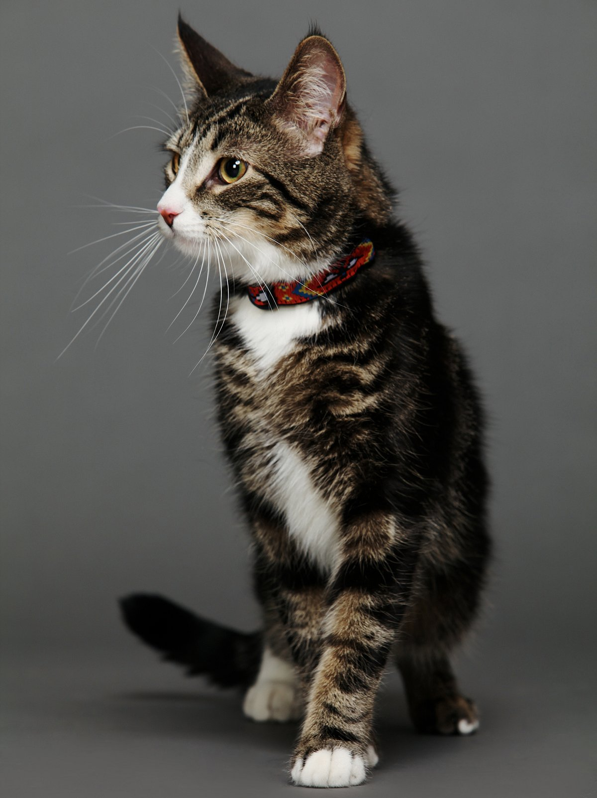 Good Vibes Cat Collar