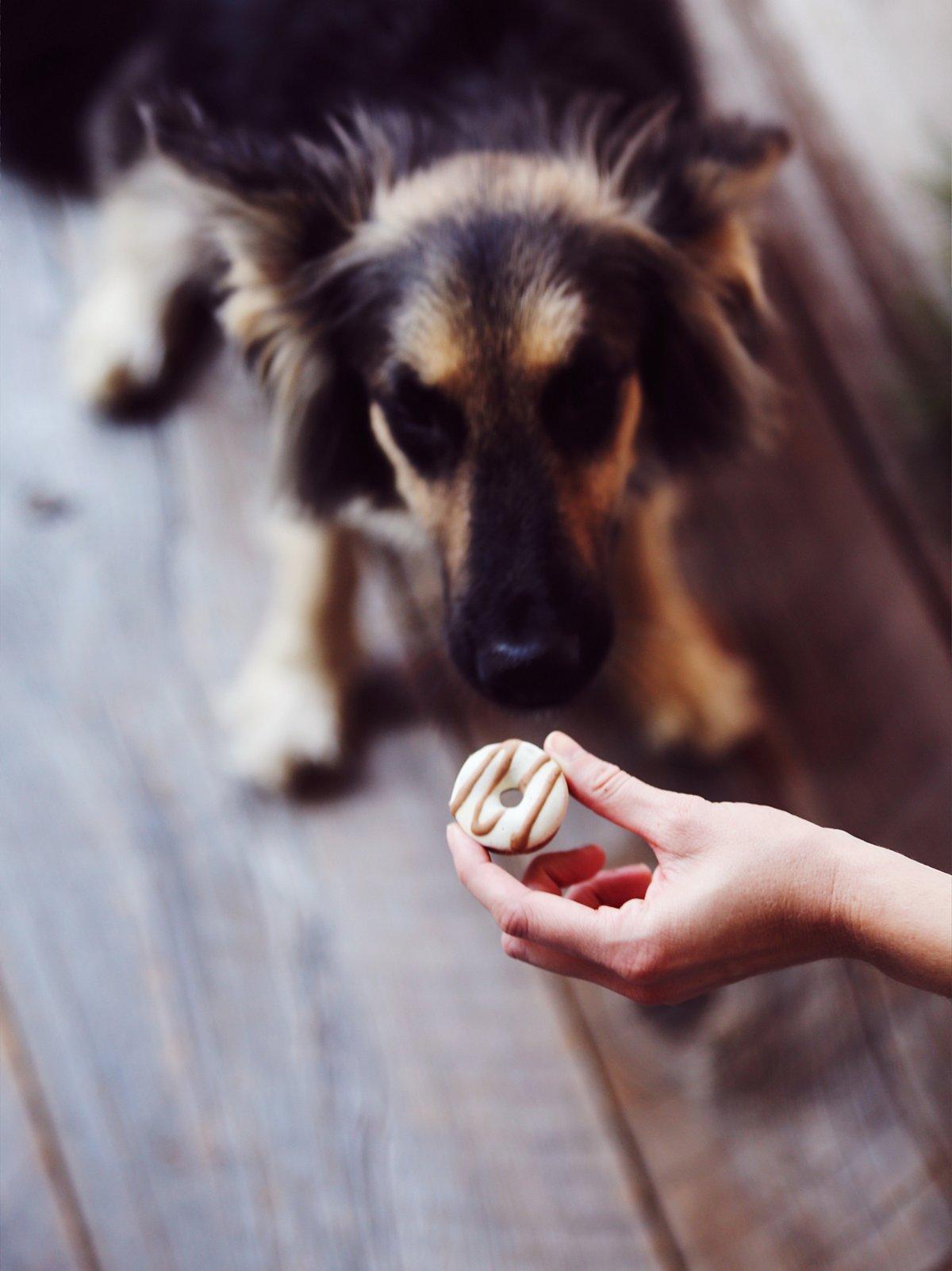 Donut Dog Treats