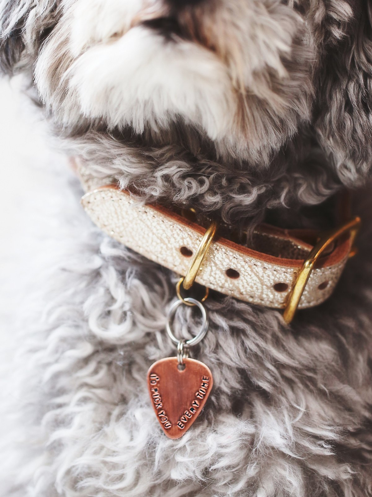 'I Pick You' Pet Tag