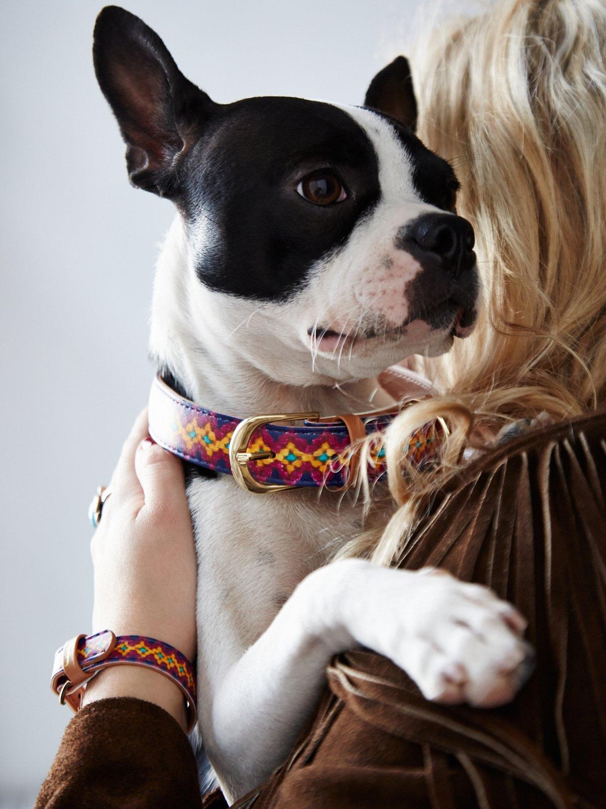 Friendship Dog Collar