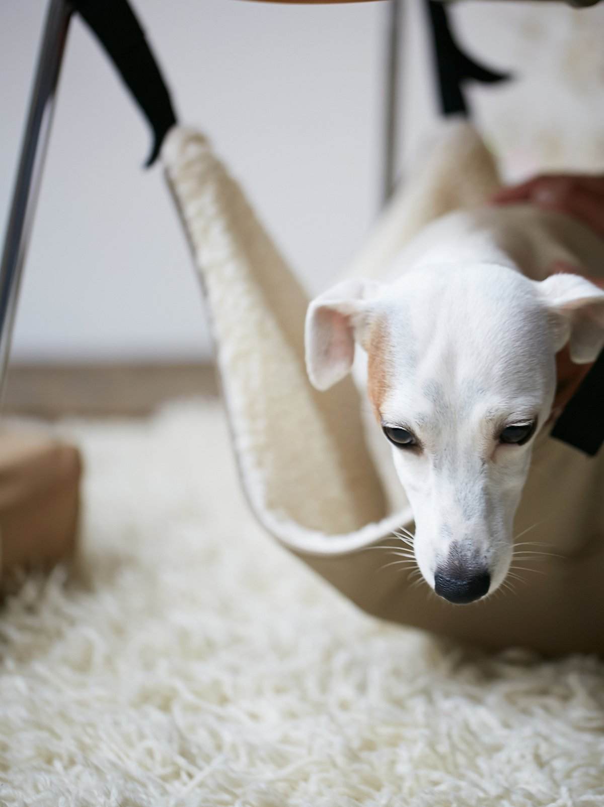 Sleepy Bones狗狗吊床