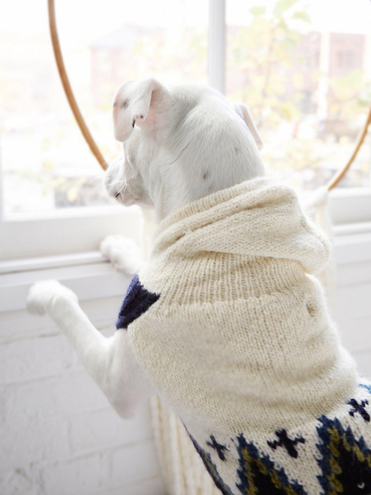 舒适毛线狗狗连帽衫