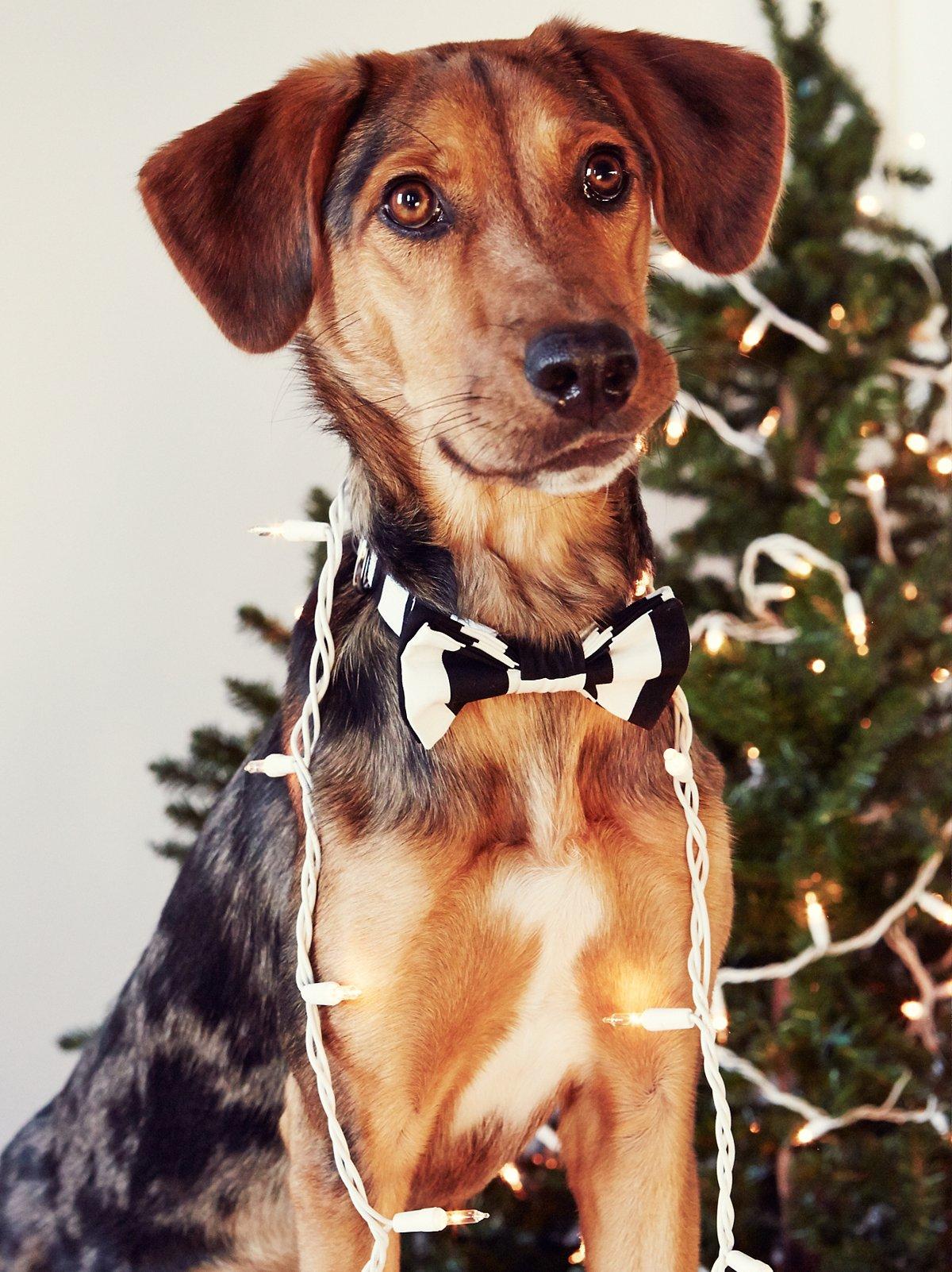 Little Lad Bow Tie Collar