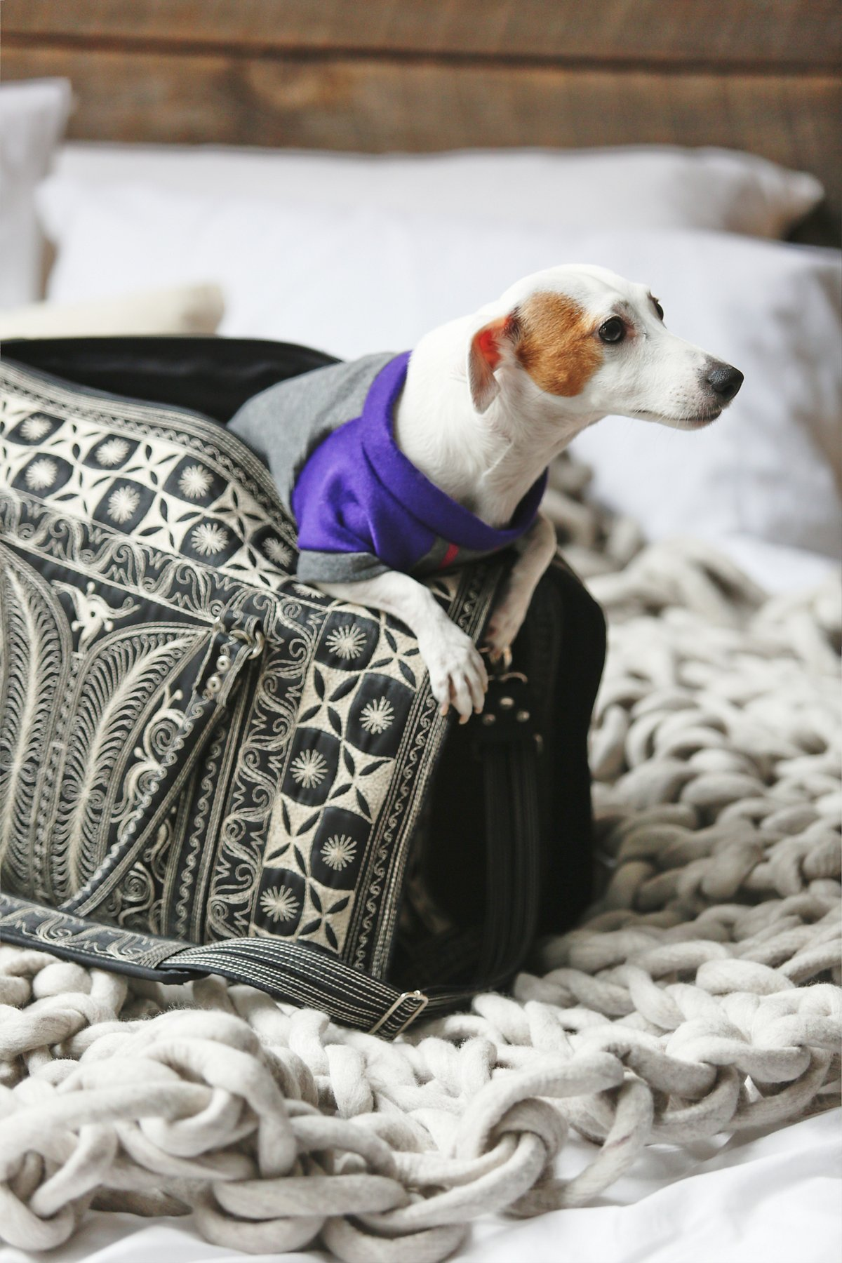 Yala刺绣宠物包