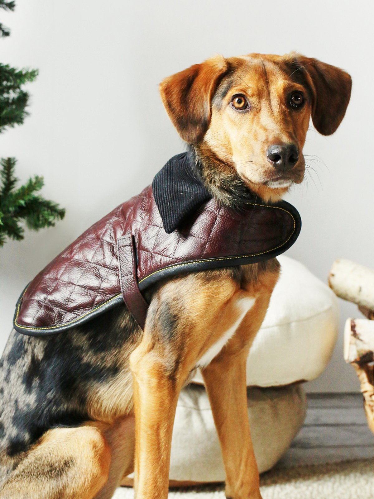 Quilted Leather Dog Jacket