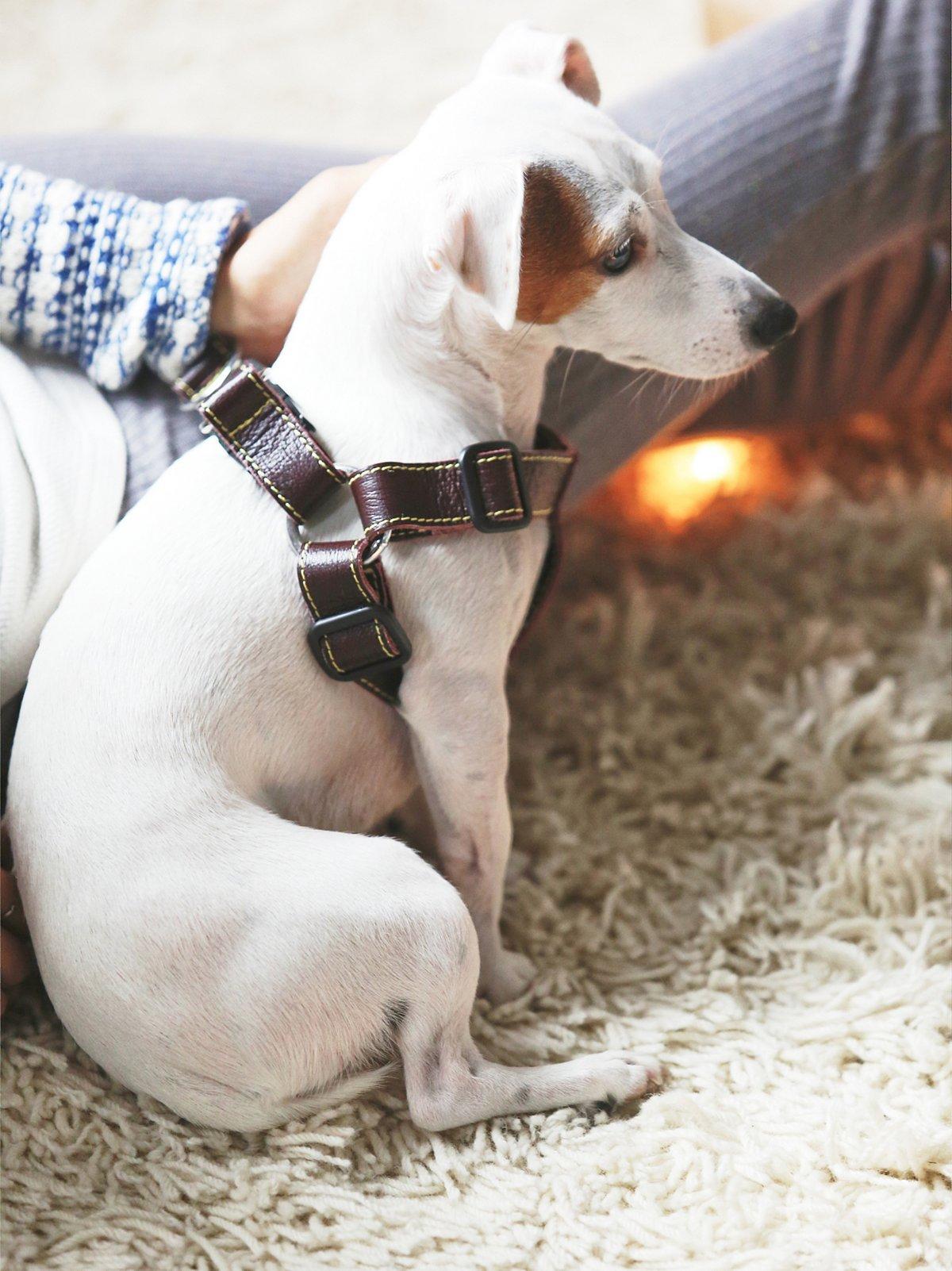 Proper Pup皮革背带