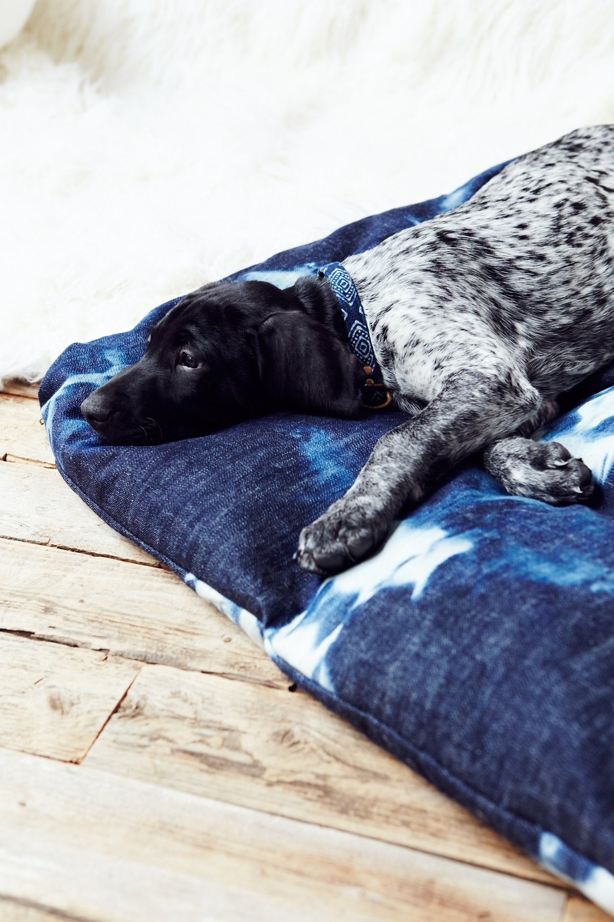 Tell Me Your Dreams Dog Bed