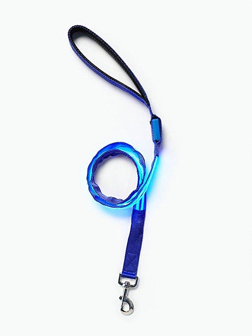 Product Image: Light Up Leash
