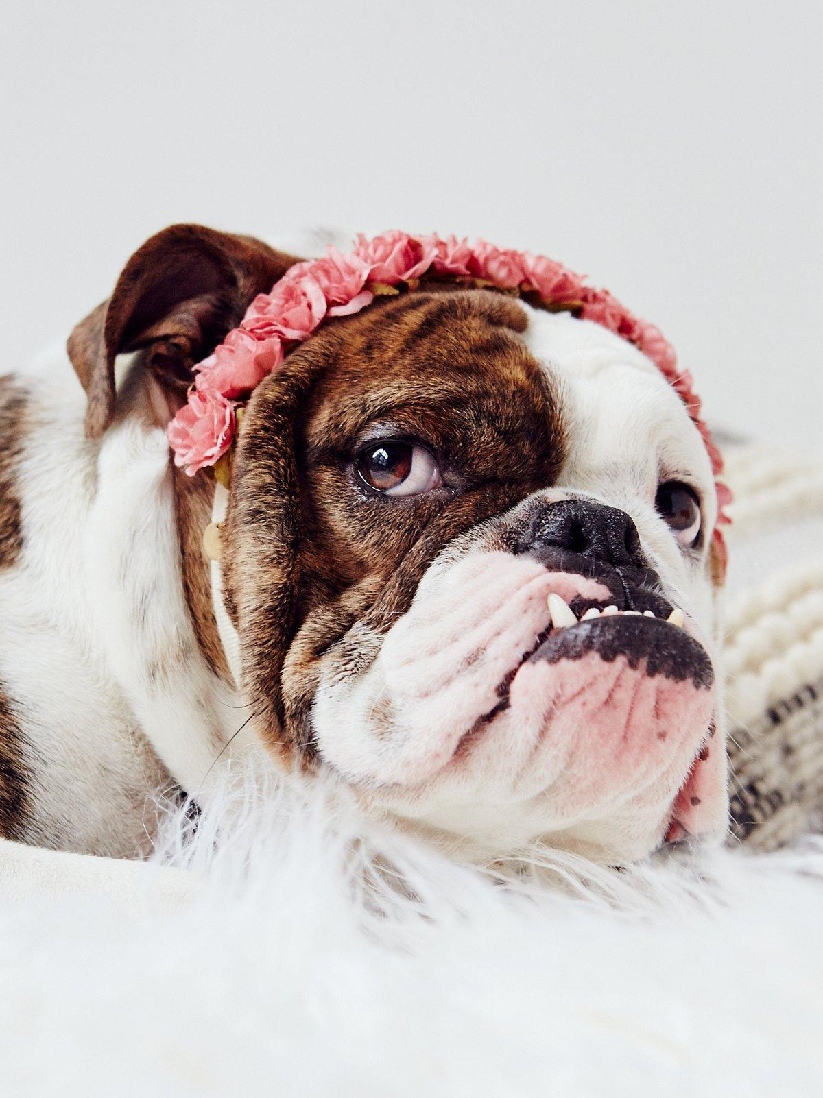 Puppy Flower Crown