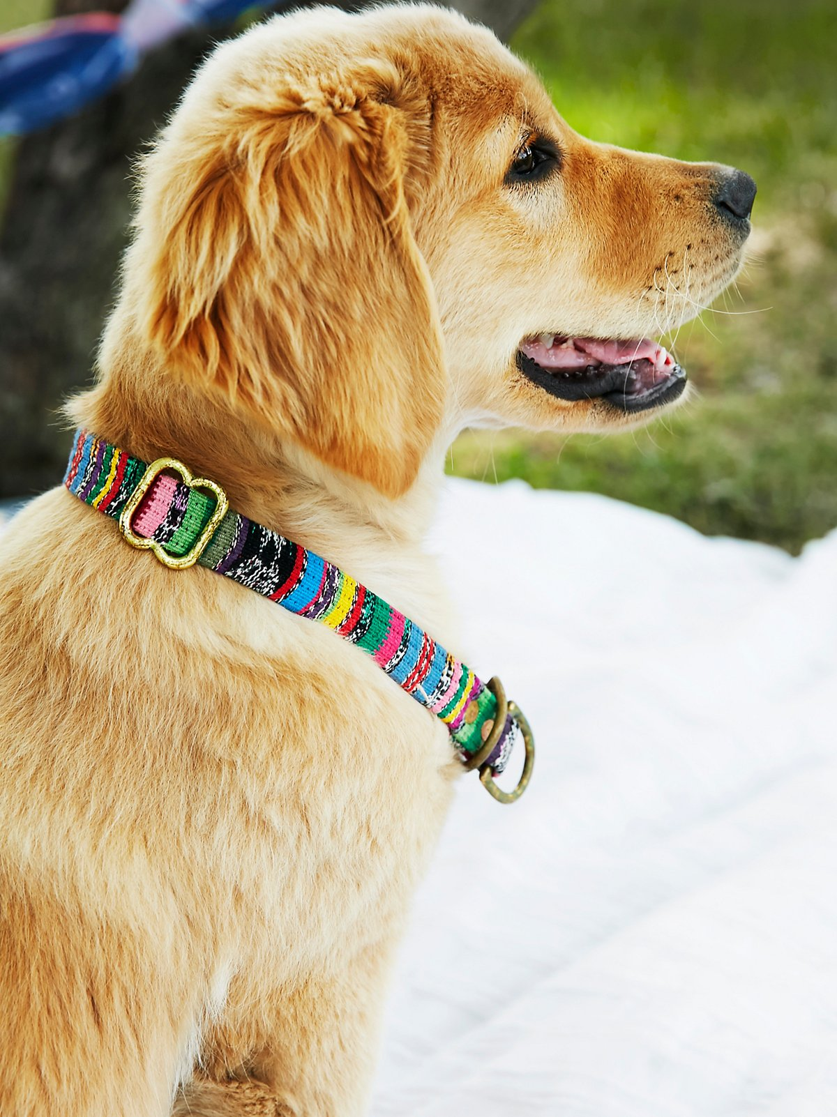 Strawberry Field Collar