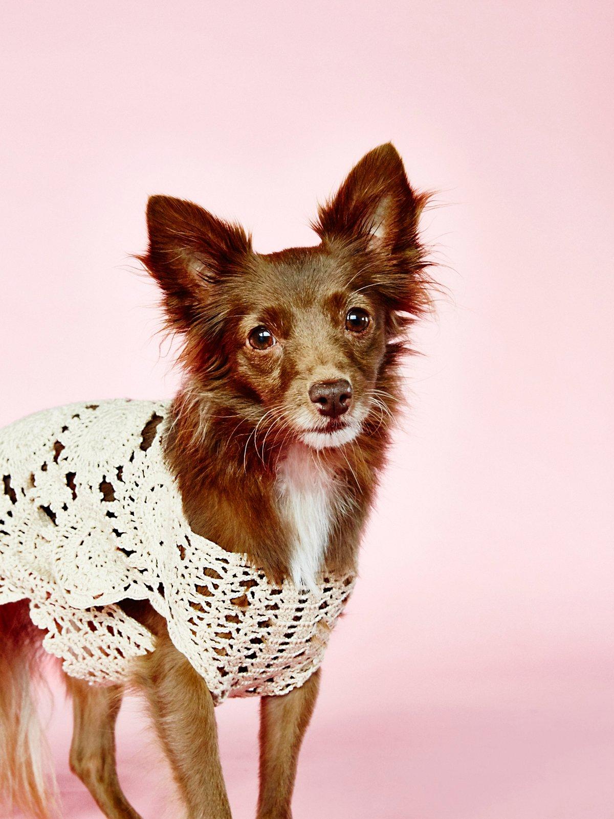 Doggy Daydream Crochet Sweater