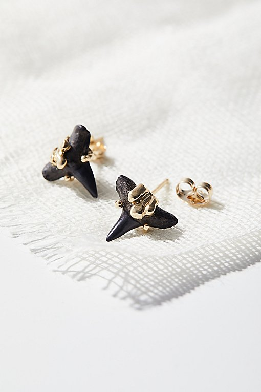 Product Image: 14k Fossilized Shark Tooth Studs